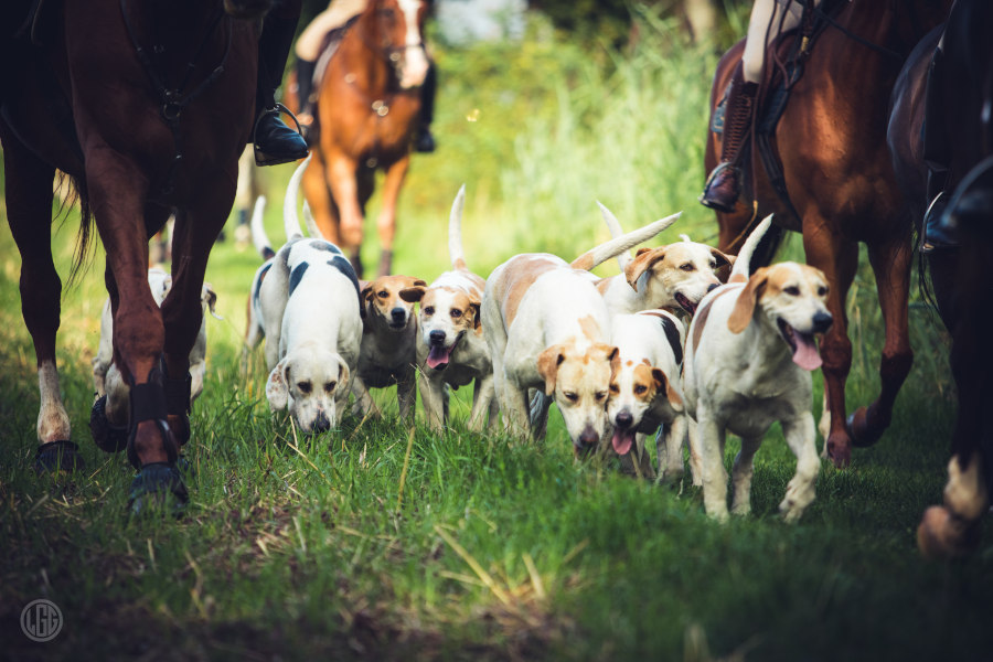 Jagd und Pferd